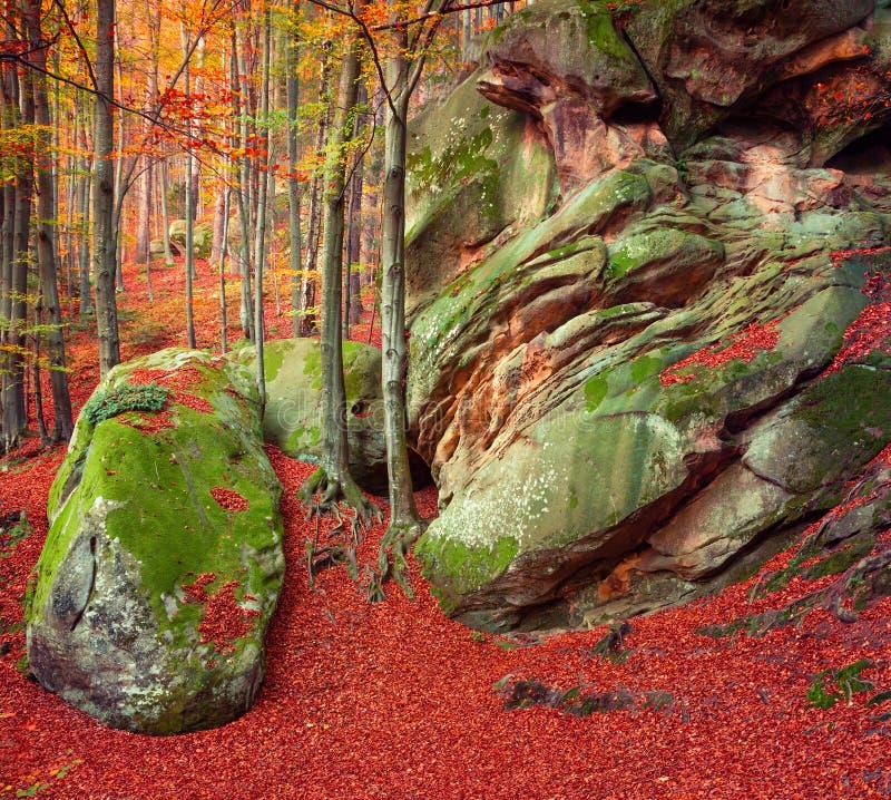 五颜六色的秋天场面在山森林里 免版税库存照片