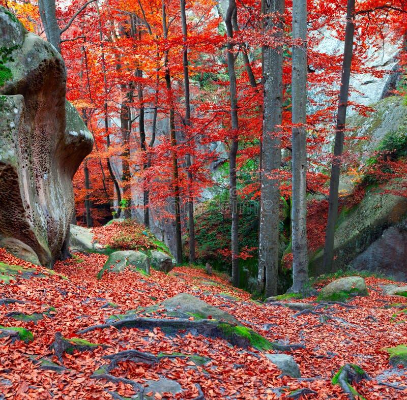 五颜六色的秋天场面在山森林里 免版税图库摄影