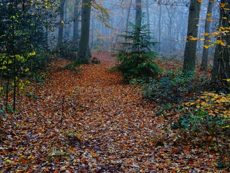 五颜六色的秋天场面在森林里 库存照片