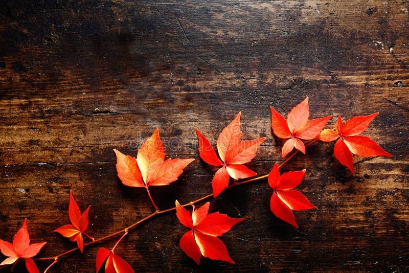 五颜六色的秋天弗吉尼亚爬行物 免版税库存图片