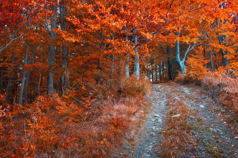 五颜六色的秋天早晨在黑暗的山森林里 免版税库存照片