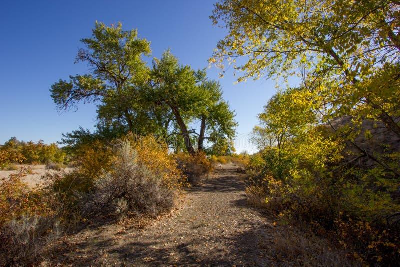 五颜六色的秋天林木线远足雪山大农场的道路土 免版税图库摄影