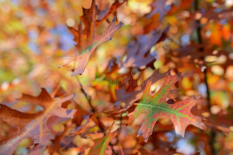五颜六色的秋天树和叶子 库存图片