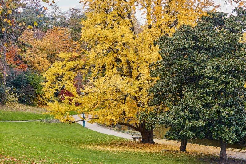 五颜六色的秋天树在Montsouris停放,巴黎, 免版税库存照片