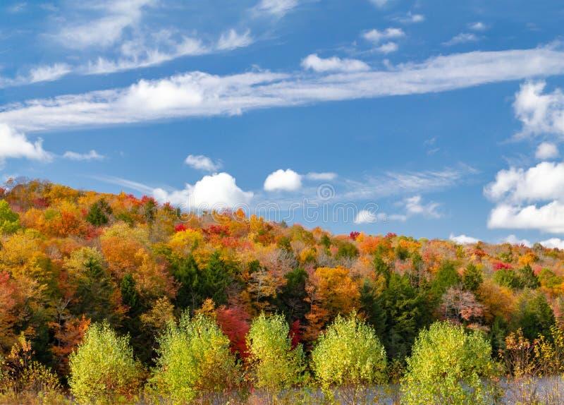 五颜六色的秋天森林叶子在新英格兰 免版税库存图片