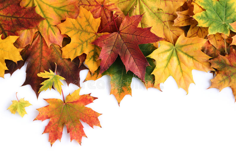 五颜六色的秋天槭树叶子边界  免版税库存图片