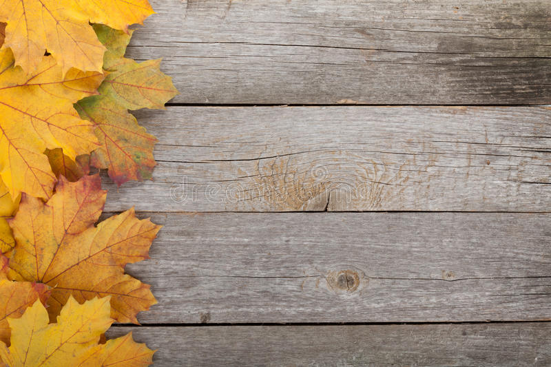 五颜六色的秋天槭树叶子 免版税库存图片