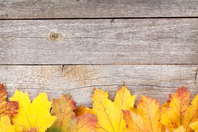 五颜六色的秋天槭树叶子 图库摄影