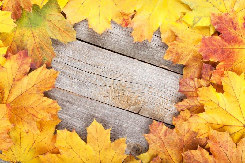 五颜六色的秋天槭树离开框架 免版税库存图片
