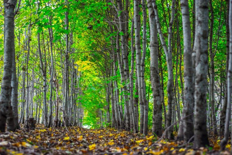 五颜六色的秋天深绿色胡同 免版税库存图片