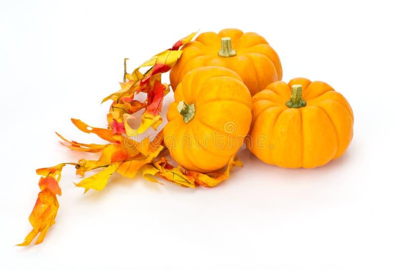 五颜六色的秋天留下南瓜 免版税库存图片