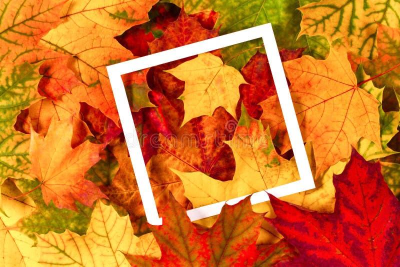 五颜六色的秋天秋天留下withempty白色框架 免版税库存照片