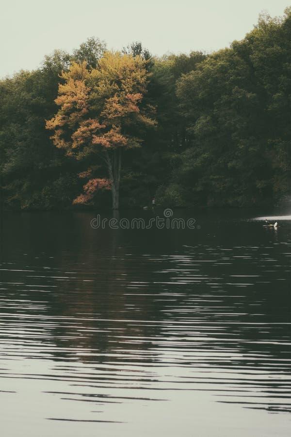 五颜六色的秋天/秋叶在一个湖的一个森林里在新英格兰 颜色的红色橙色和绿色 库存图片