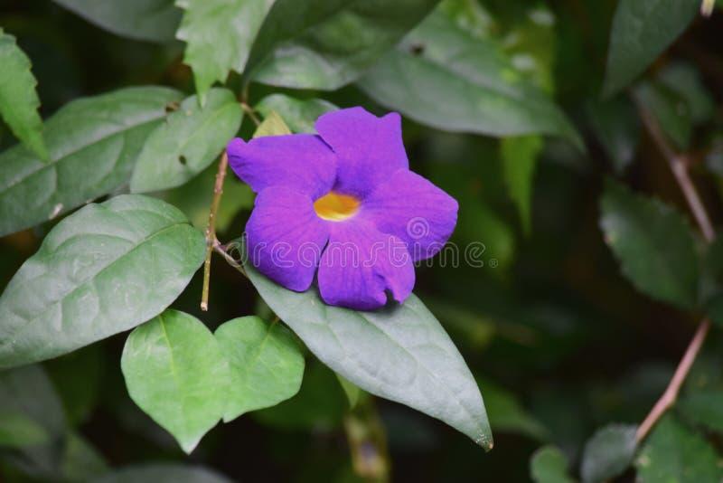 五颜六色的紫色花秀丽  图库摄影