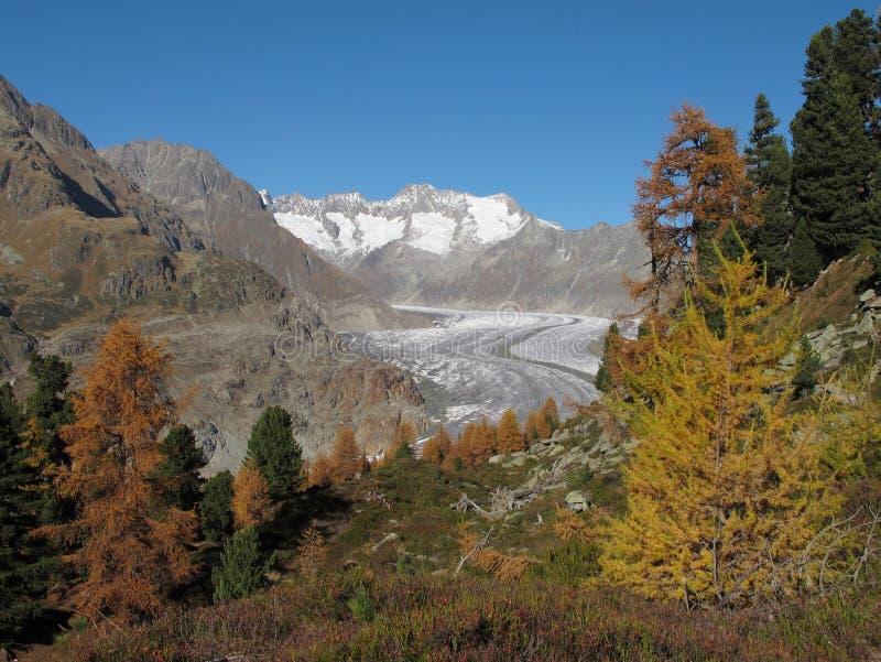 五颜六色的结构树、冰川和山 库存照片