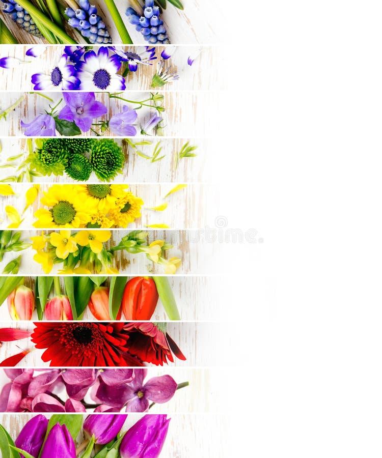 五颜六色的绽放混合 免版税库存图片