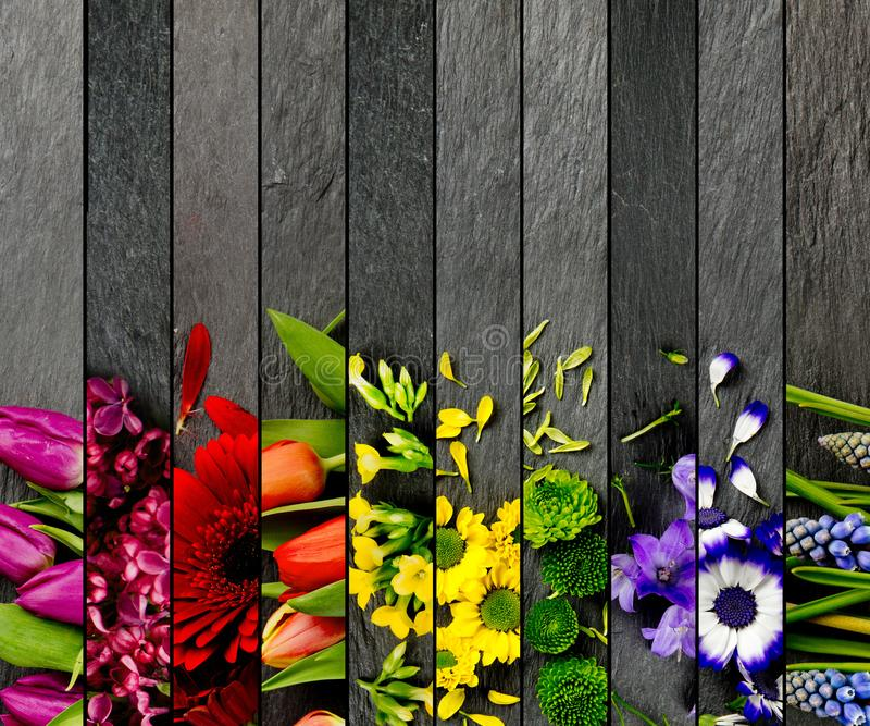 五颜六色的绽放混合 免版税库存照片