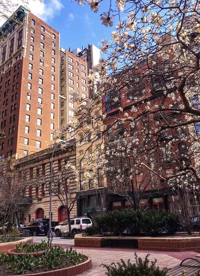 五颜六色的绿洲在纽约的中心 图库摄影