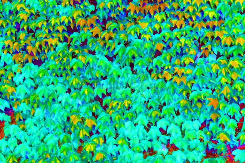 五颜六色的绿色狂放的葡萄离开织地不很细背景 库存图片