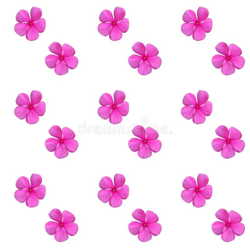 五颜六色的美丽的自然主义的桃红色花 无缝的模式 v 库存例证