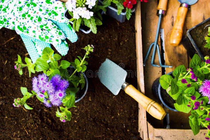 五颜六色的花和园艺工具在土壤 免版税库存图片