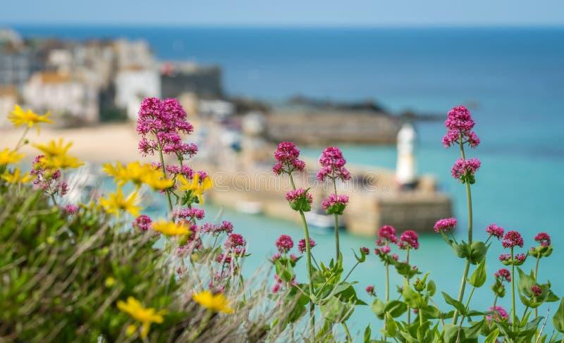五颜六色的花和圣Ives海湾 免版税库存照片