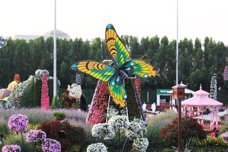 五颜六色的花和蝴蝶非常美丽的景色在奇迹庭院,迪拜里 库存图片