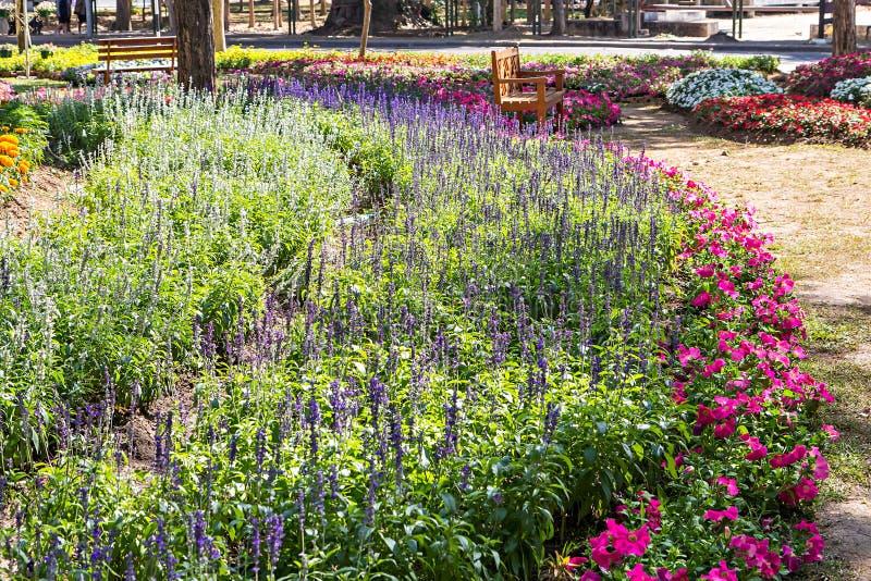 Download 五颜六色的花园 库存图片. 图片 包括有 正式, 绽放, 徽章, 长凳, beautifuler, 庭院 - 72363513