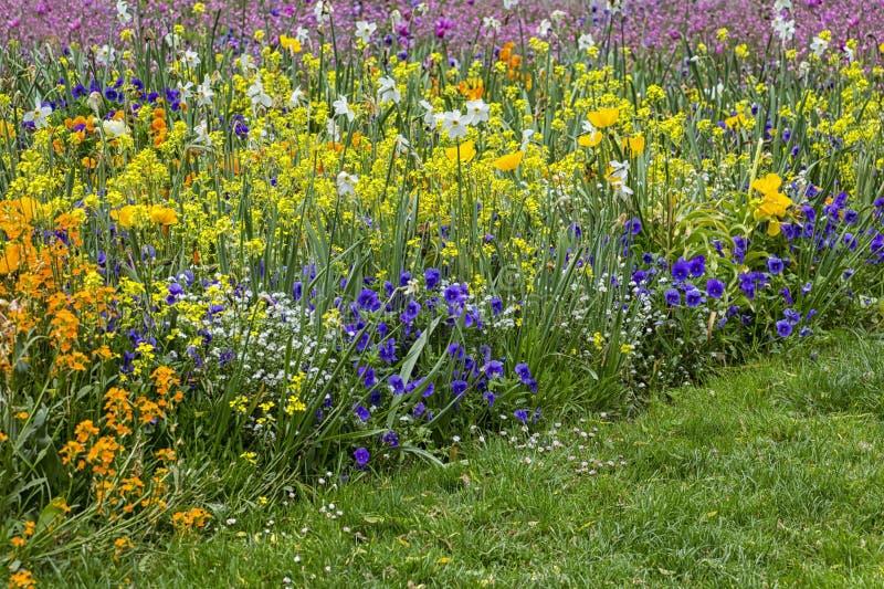 五颜六色的花圃在有蝴蝶花的,黄水仙,郁金香春天 库存照片