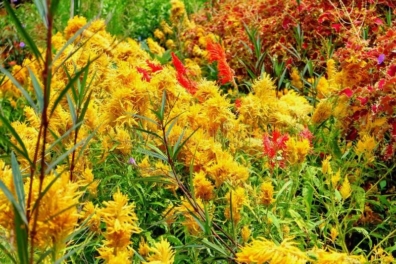 五颜六色的花在庭院里 免版税图库摄影