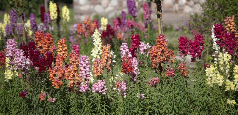 五颜六色的花在春天 库存照片