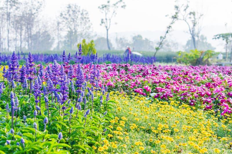 五颜六色的花在规则式园林里 库存图片