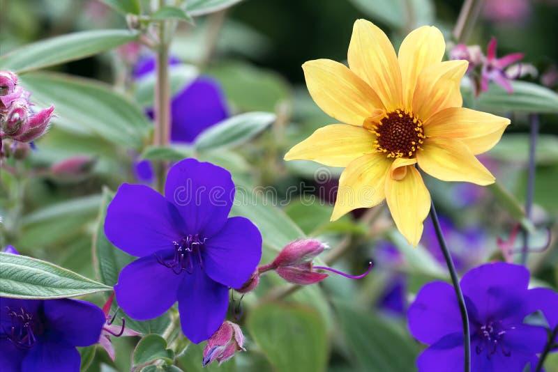 五颜六色的花在绽放背景中 库存照片