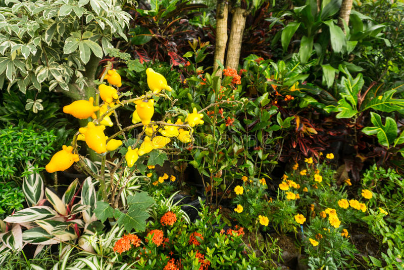 五颜六色的花幼木在塑料罐出售的由在雅加达拍的卖花人照片印度尼西亚 库存图片