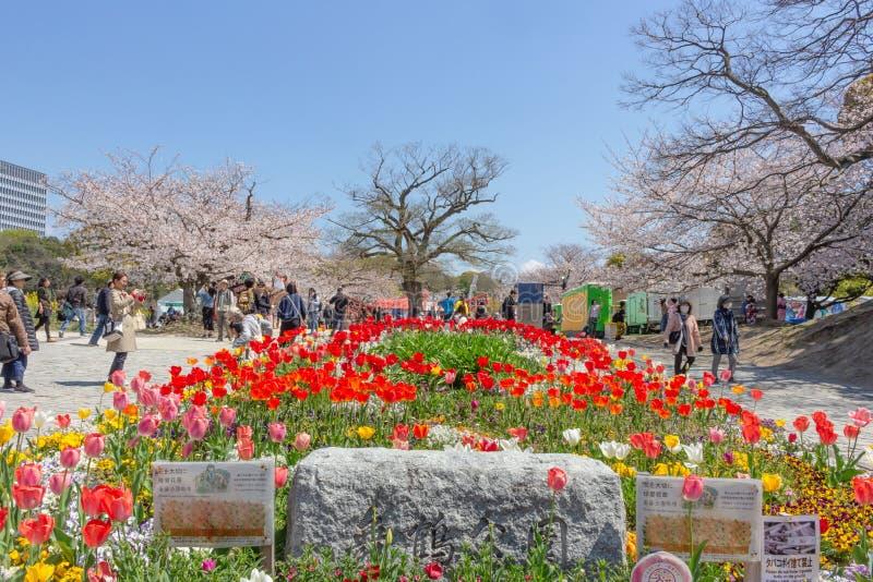 五颜六色的花床在舞鹤公园,福冈 库存图片