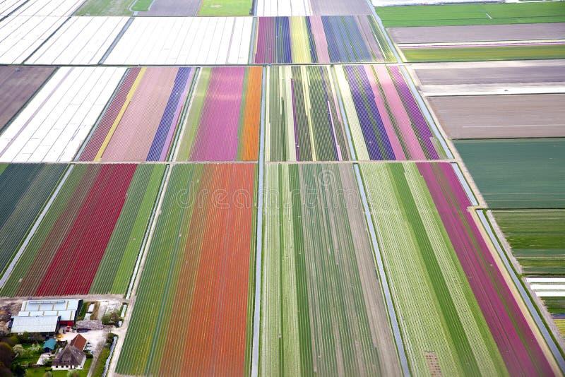 五颜六色的花田从上面 免版税图库摄影