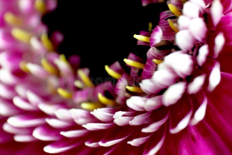 五颜六色的花的特写镜头 免版税库存图片