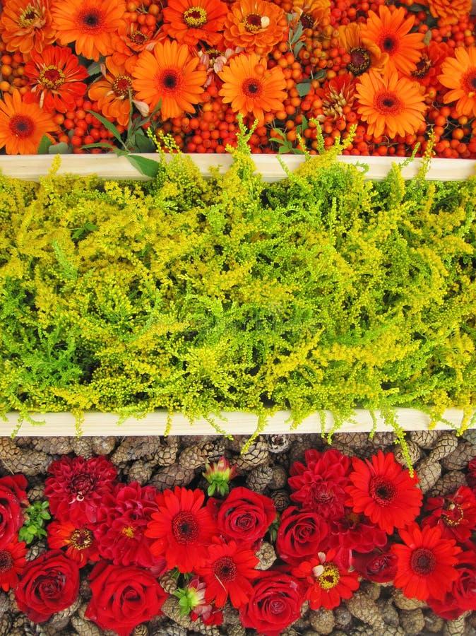 五颜六色的花纹花样 库存照片
