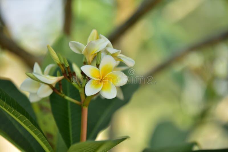 五颜六色的花 小组花 小组黄色白花 库存图片