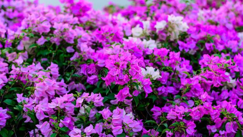 五颜六色的花 图库摄影