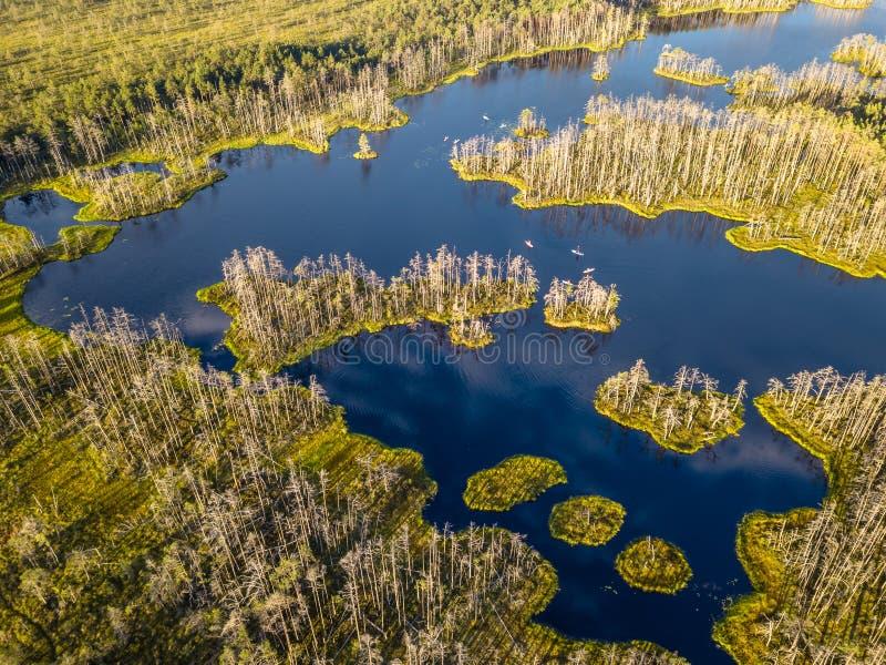 五颜六色的荒野喜怒无常的寄生虫照片在初夏日出的 免版税库存照片
