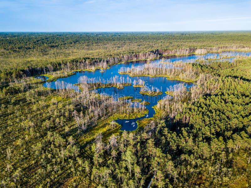 五颜六色的荒野喜怒无常的寄生虫照片在初夏日出的 库存图片