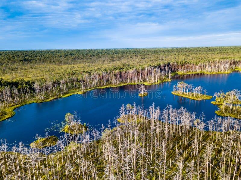 五颜六色的荒野喜怒无常的寄生虫照片在初夏日出的 库存照片