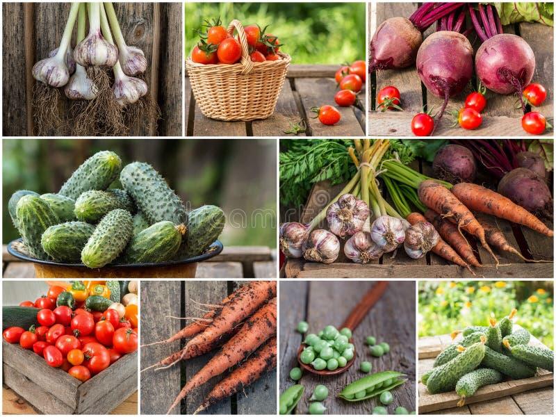 五颜六色的菜混合照片  在倾吐的餐馆沙拉的主厨概念食物新鲜的厨房油橄榄 免版税库存图片