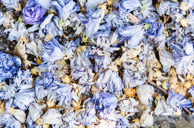 五颜六色的蓝色杂烩背景  图库摄影