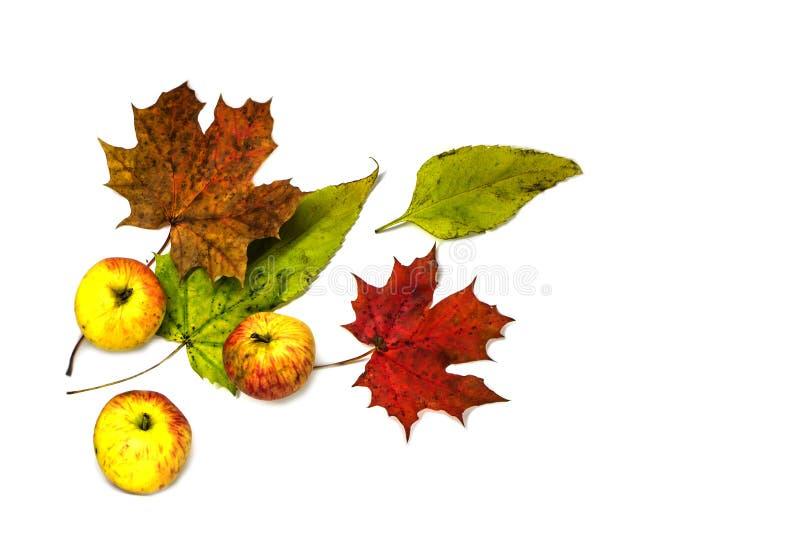 五颜六色的蔬菜、水果、秋叶和莓果的时髦的构成 在空白背景的顶视图 免版税库存照片