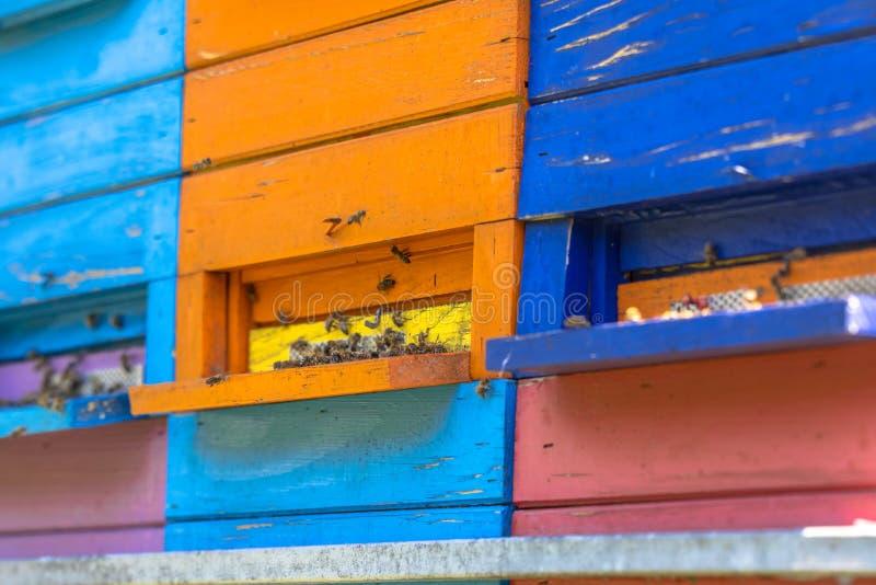 五颜六色的蜂箱 库存照片
