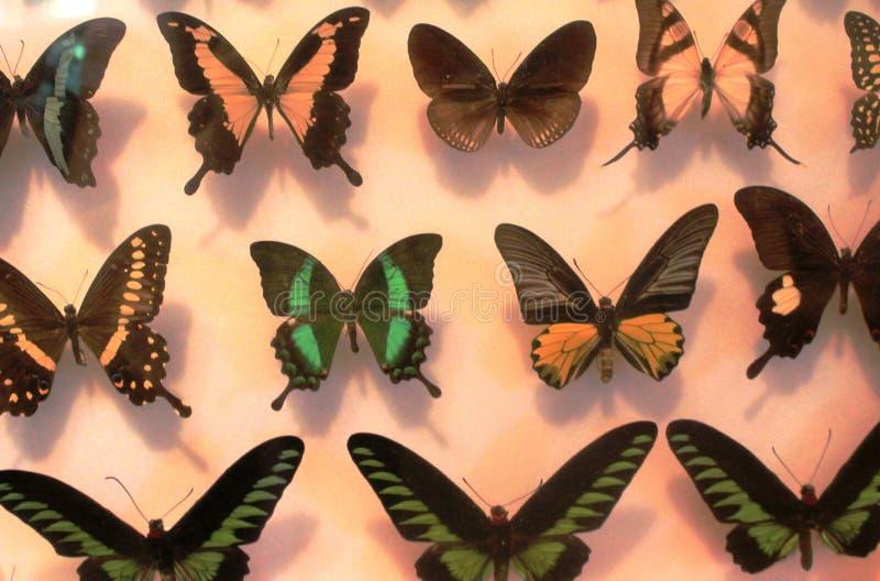 五颜六色的蝴蝶的好的收藏在白色背景的 免版税图库摄影