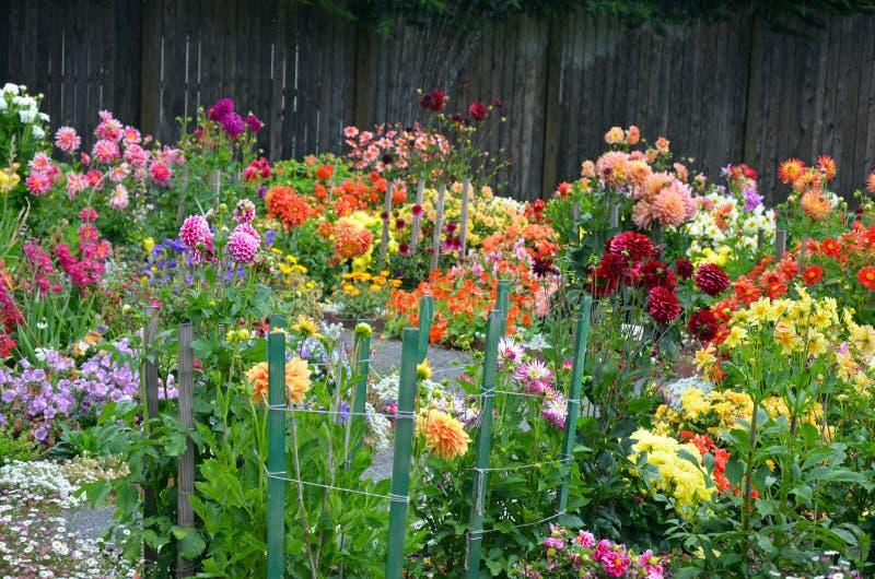 五颜六色的被分类的大丽花庭院 免版税库存图片