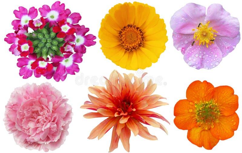 五颜六色的设计要素花集 库存照片